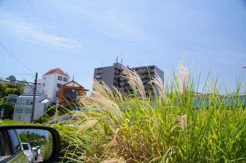 20100719江ノ島水族館 - 01.jpg