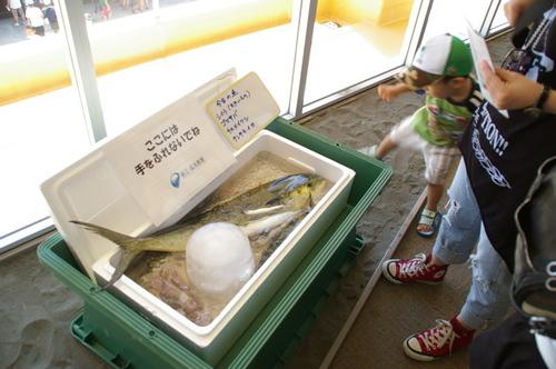 20100719江ノ島水族館 - 07.jpg
