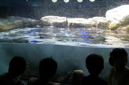20100719江ノ島水族館 - 09.jpg