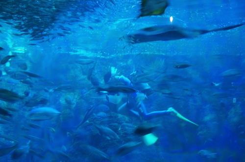 20100719江ノ島水族館 - 48.jpg