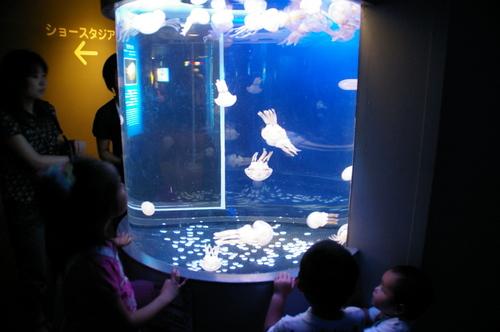 20100719江ノ島水族館 - 56.jpg