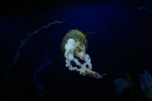 20100719江ノ島水族館 - 60.jpg